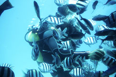 Diver under water Stock Image