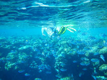 Diver underwater royalty free stock photos