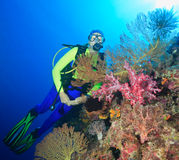 Diver Underwater. A pretty female scuba diver with pink soft corals and sea fans Royalty Free Stock Photo