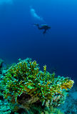 Diver with underwater camera. Swimming over coral Stock Images