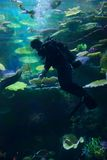 Diver underwater with fish Stock Photos