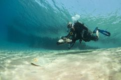 Diver on underwater scooter with sting ray Royalty Free Stock Image