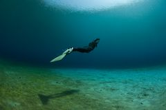 Diver underwater swimming. A diver swimming underwater with a single fin, unifin or mermaid fin Stock Image