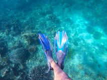 Diver wearing blue fin for diving. Fin royalty free stock photo