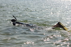 Diver in a wetsuit swims. In water Stock Photo