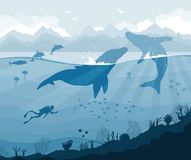 Diver and whales with dolphins, jellyfish, fish. Silhouette of diver and big whales with dolphins, jellyfish, fish on a blue sea and mountains background Stock Photography