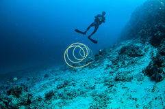 Diver and wire coral in Gili, Lombok, Nusa Tenggara Barat, Indonesia underwater photo Stock Photography