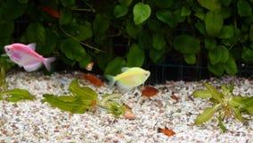 Diverese fisk i ett akvarium stock video