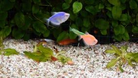 Diverese fisk i ett akvarium lager videofilmer