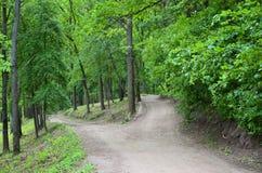 Divergence des chemins dans les carrefours de forêt parmi des beaucoup arbre images stock