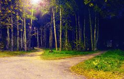 Divergence paths in the park at night. Autumn landscape royalty free stock photo