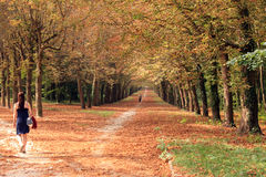 Divergent paths in autumn Royalty Free Stock Photo