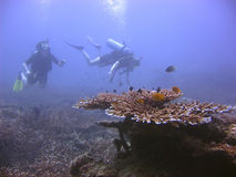 Divers. Diving over beautiful reef Stock Image