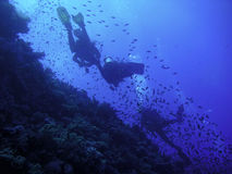 Divers. Three divers in the sea near a coral reef stock photography