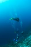 Divers above reef. In Bonaire Royalty Free Stock Image