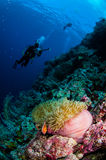 Divers, anemone, clownfish, soft coral in Banda, Indonesia underwater photo Royalty Free Stock Photos