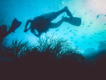 divers and anemone. Marine life Stock Photography