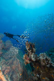 Divers and the aquatic life in the Red Sea. Stock Image