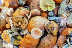 Divers champignons comestibles Photographie stock