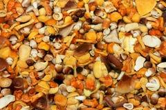 Divers champignons de couche Images stock