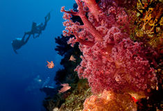 Divers and coral reef Royalty Free Stock Photos