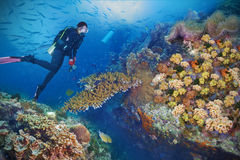 Divers and coral reef Stock Photography