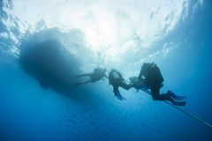 Divers decompressing underwater on a rope Stock Photography