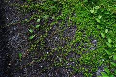 Divers des feuilles de fougère sur le fond en pierre Photo stock