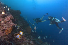 Divers drift over reef with butterflyfish and angelfish Stock Photo