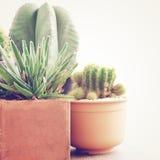 Divers du cactus avec le rétro effet Photos stock