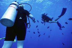 Divers and Durgons. 2 female divers play on their way back to the boat with black durgon fish stock image