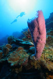 Divers en tropisch koraalrif stock foto's