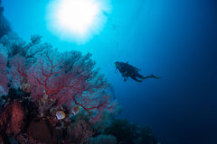 Divers royalty free stock image