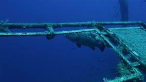 Divers exploring Zenobia shipwreck stock video