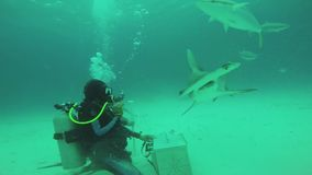 Divers feeding floating hammer fish underwater. Ocean wildlife. Bubbles. Diving. Blue clean water stock footage