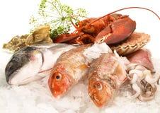 Divers fruits de mer et poissons images libres de droits