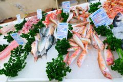 Divers fruits de mer frais en boutique de Pescheria Bari, Italie Photos libres de droits
