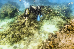 Divers in gear swim under water amid coral reef Stock Photography