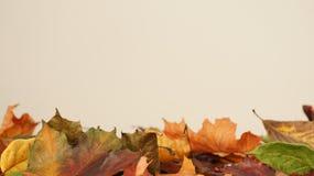 Divers Gekleurd Autumn Leaves tegen een lichte Achtergrond stock foto