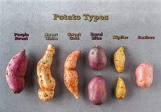 Divers genres de configuration plate de pommes de terre avec des labels Photo stock