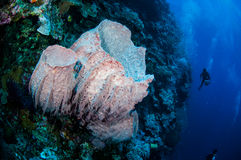 Divers, giant barrel sponge in Banda, Indonesia underwater photo Stock Photos