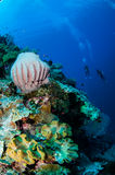 Divers, giant barrel sponge, mushroom leather coral in Banda, Indonesia underwater photo Stock Photo