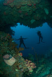 Divers, giant barrel sponge, wire corals in Ambon, Maluku, Indonesia underwater photo Stock Photo