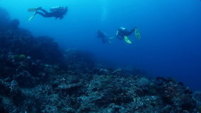 Divers stock video footage