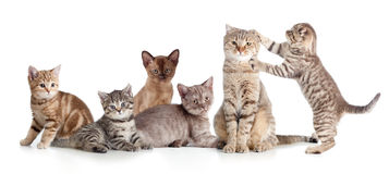 Divers groupe de chats d'isolement Photo stock