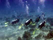 Divers with guide. A group of divers exploring polynesian coral reef of Bora Bora with a master scuba guide Stock Photos