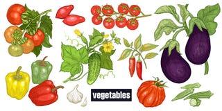 Divers légumes réglés illustration libre de droits