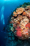 Divers, mushroom leather coral in Banda, Indonesia underwater photo Royalty Free Stock Photography