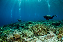 Divers and mushroom leather corals in Banda, Indonesia underwater photo Stock Photo