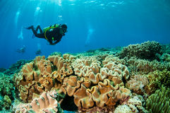 Divers and mushroom leather corals in Banda, Indonesia underwater photo Stock Photography